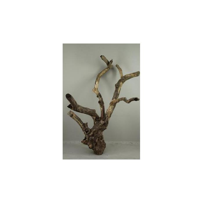 <h4>Coffee Tree Large  120-160cm</h4>