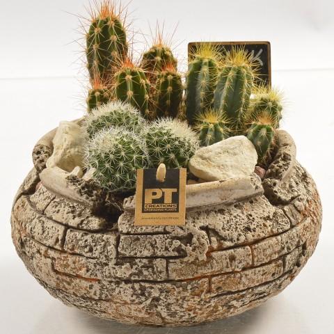 <h4>PTCT9848 Arrangementen Cactus</h4>