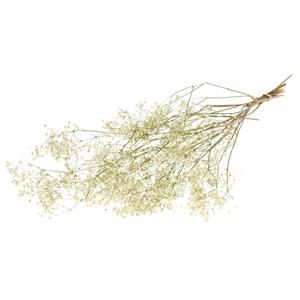 Gypsophila dried nat.white