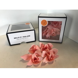 Cymbidium Large zalm