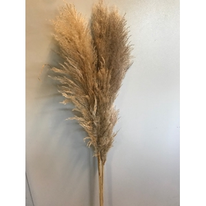 Pampas grass natural 5pc - 120cm