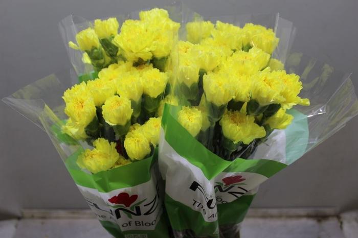 <h4>Dianthus Hermes</h4>