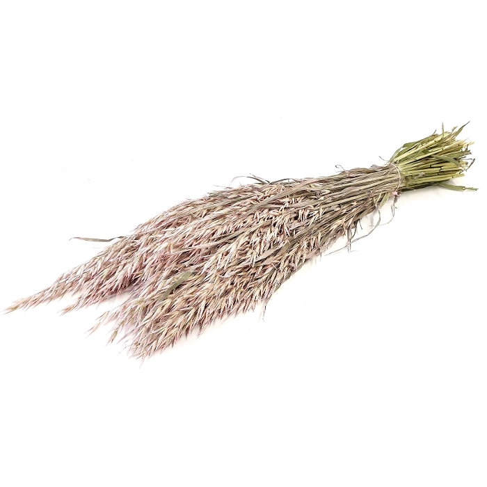 <h4>DRIED FLOWERS - AVENA FROSTED PINK (biologische verf)</h4>