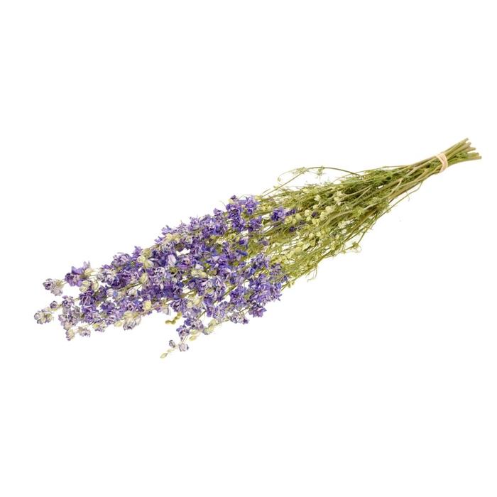 <h4>Delphinium nat.lilac</h4>