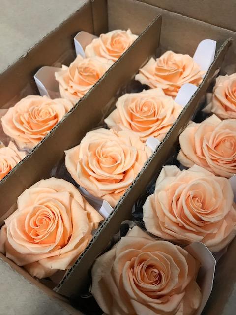 <h4>Rose on stem xl bulk 55cm peach</h4>