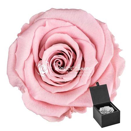 <h4>Pr 9.3 Giftbox Pin-04 Gb1</h4>