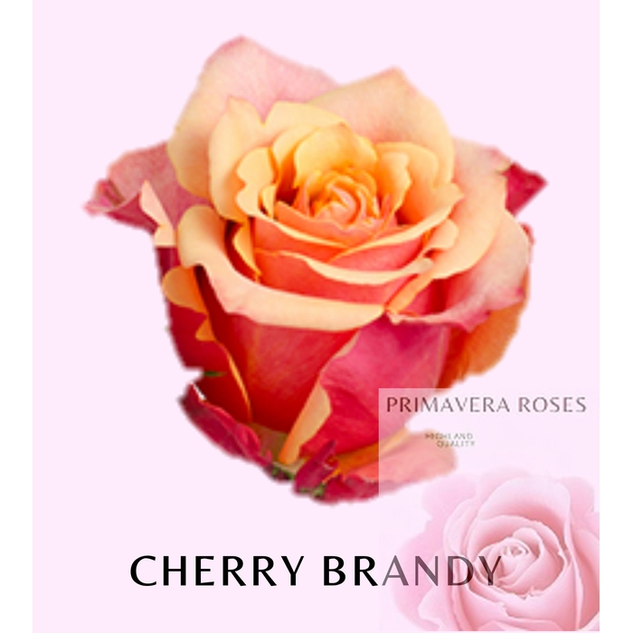 <h4>R GR CHERRY BRANDY</h4>